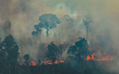 Wednesday Worldly Wisdom message from Source – The fires of the Amazon rainforest and the fires within